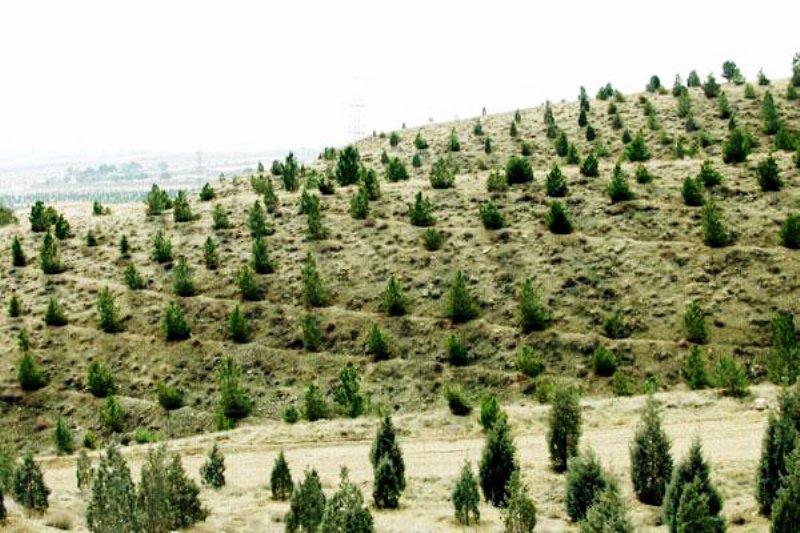 عملیات جنگل کاری در ۱۶ هکتار از اراضی ملی ری انجام شد